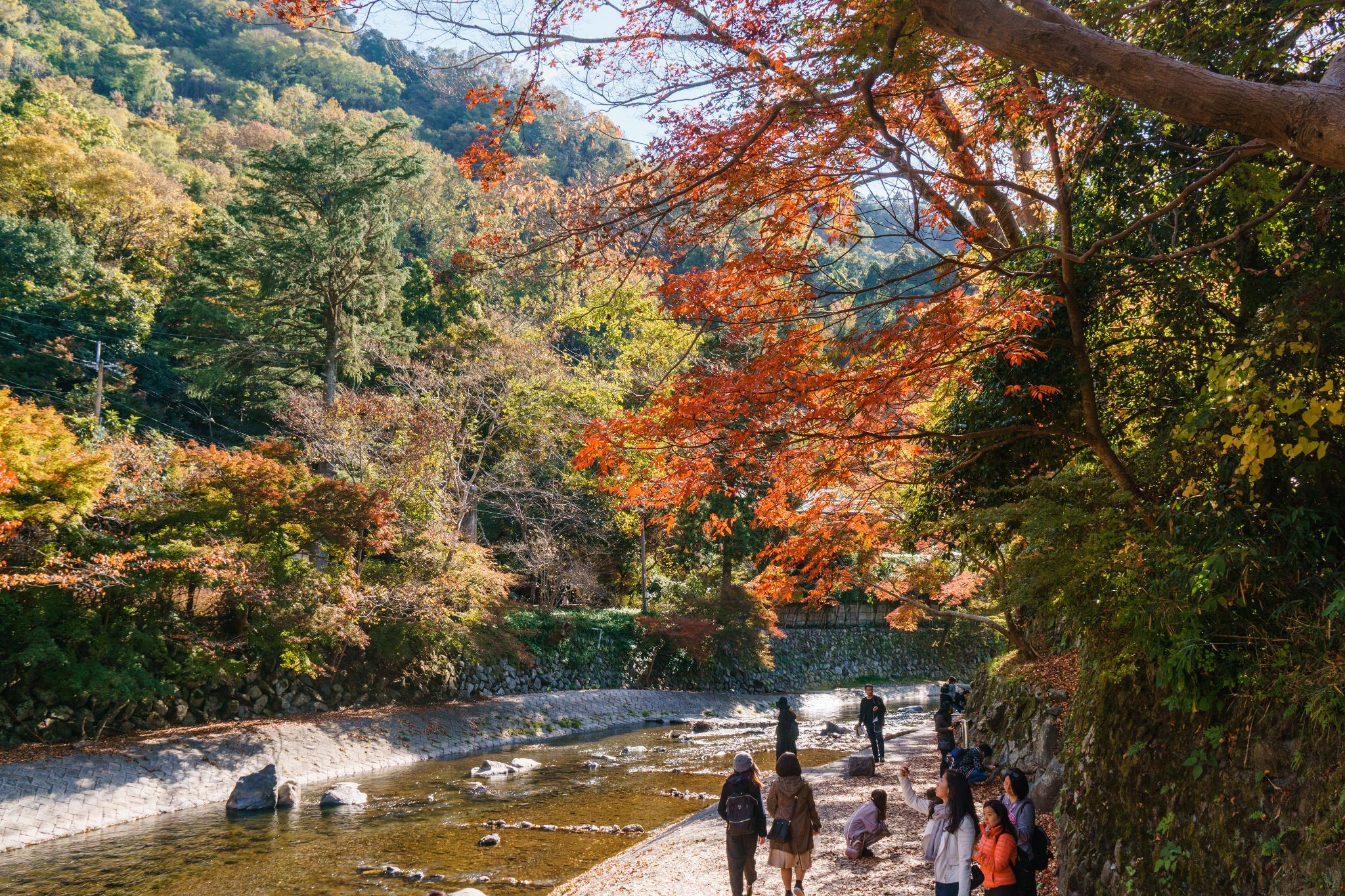 【京都】如夢似幻的琉璃光影 - 八瀨琉璃光院 72