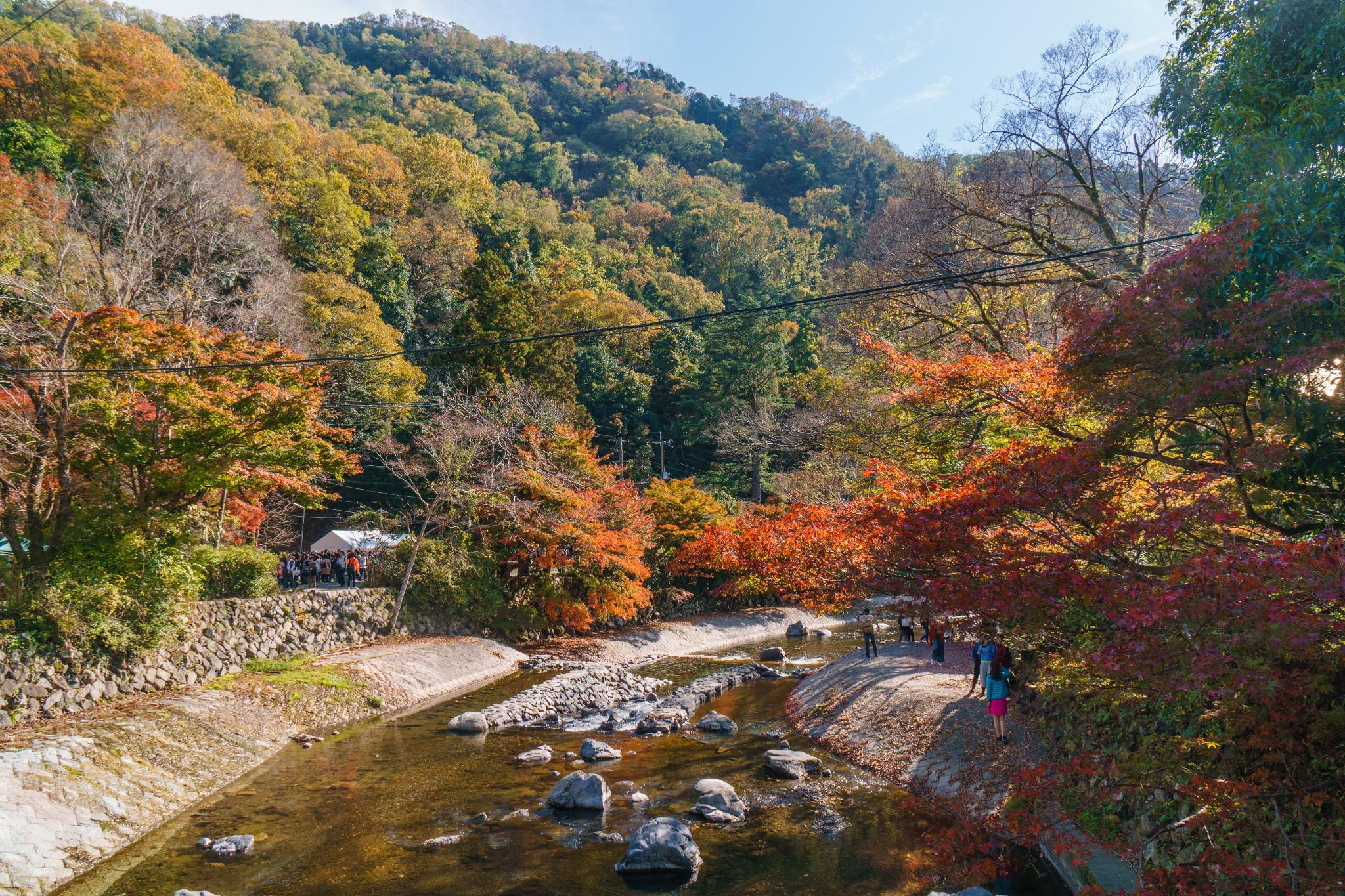 【京都】如夢似幻的琉璃光影 - 八瀨琉璃光院 70