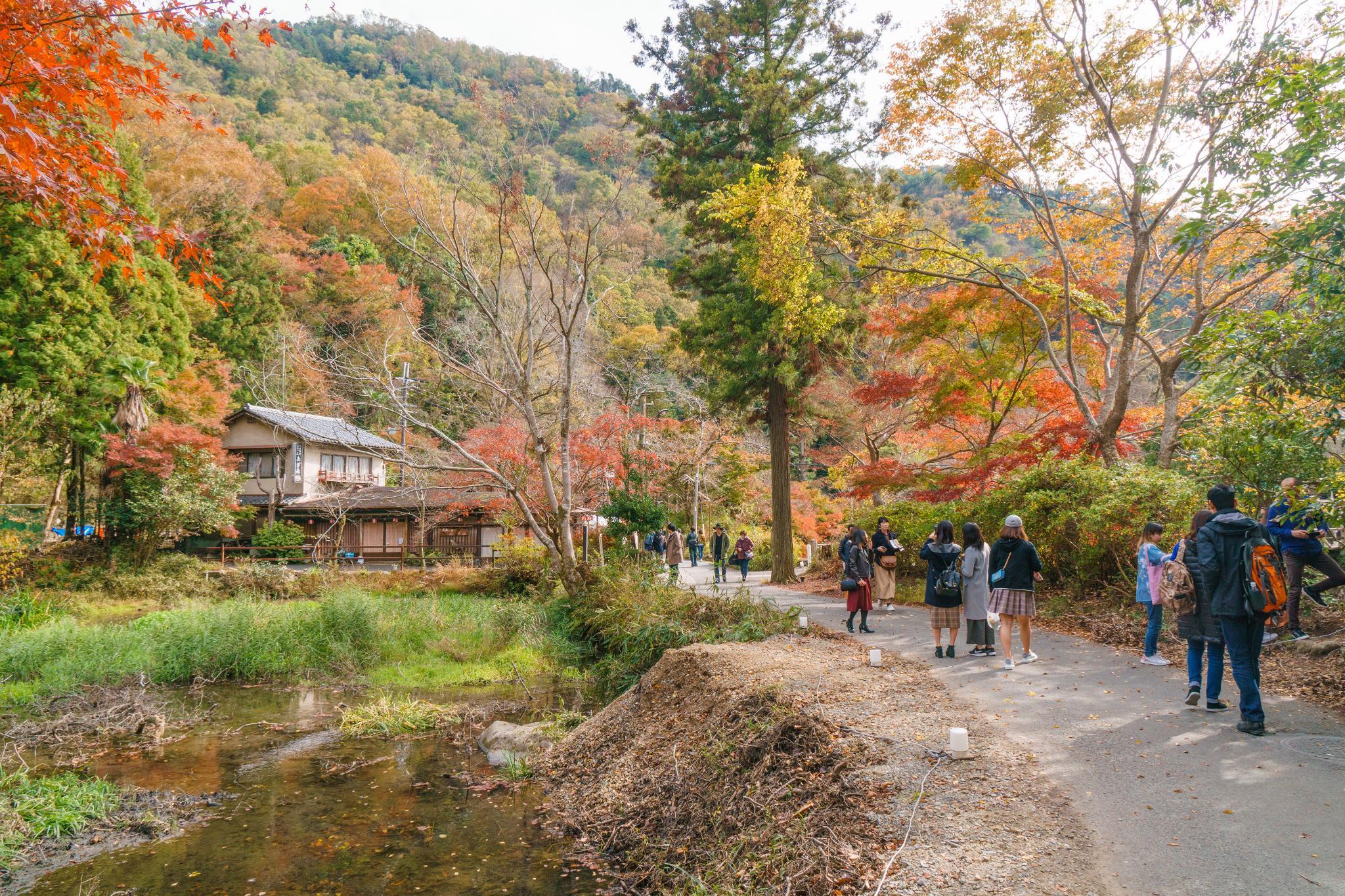 【京都】如夢似幻的琉璃光影 - 八瀨琉璃光院 76