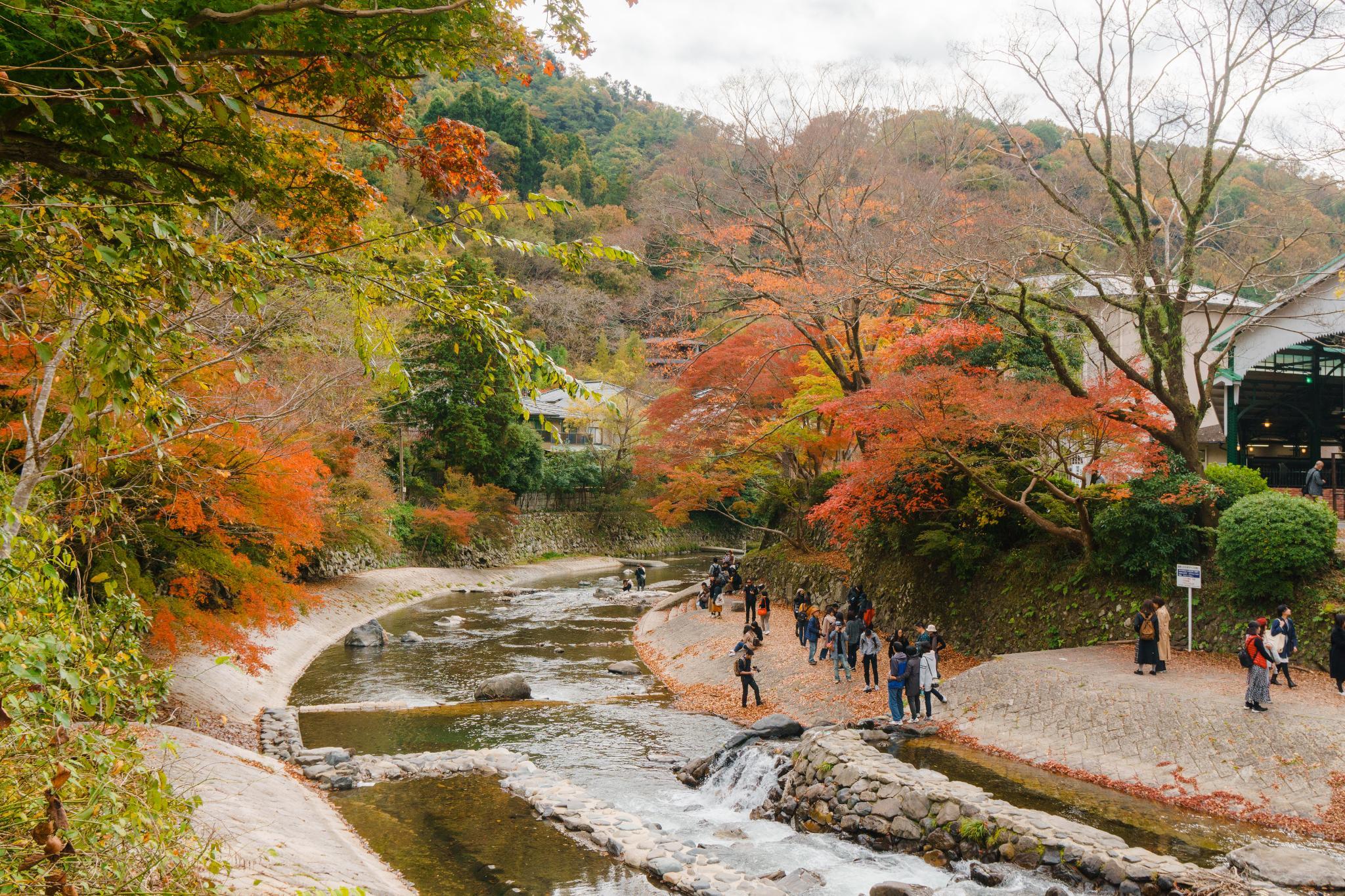 【京都】如夢似幻的琉璃光影 - 八瀨琉璃光院 67