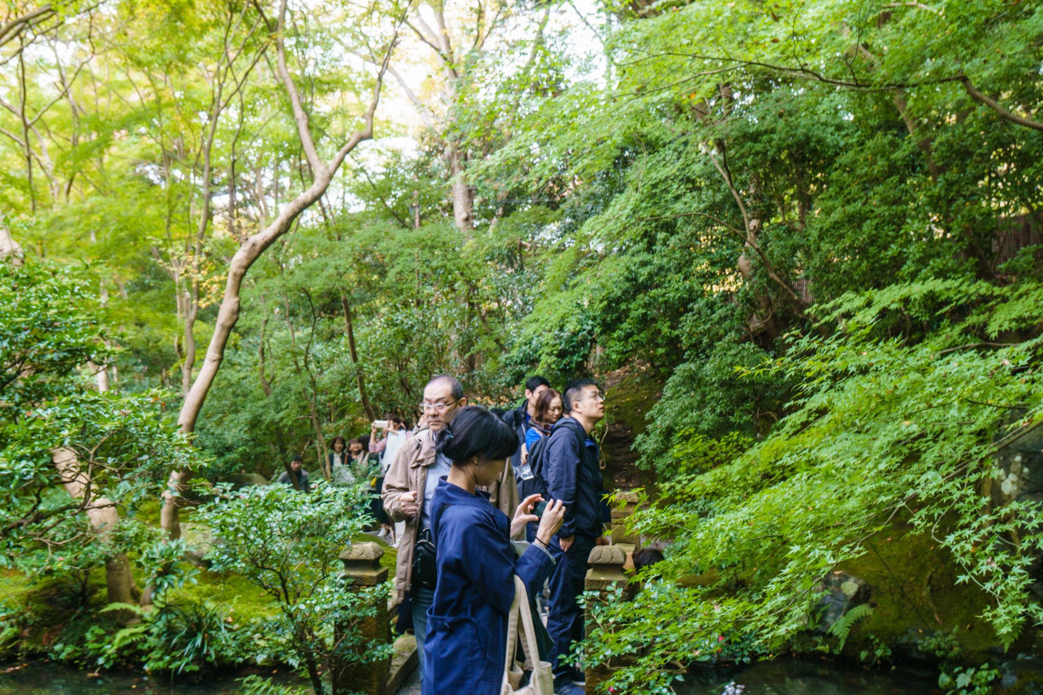 【京都】如夢似幻的琉璃光影 - 八瀨琉璃光院 80