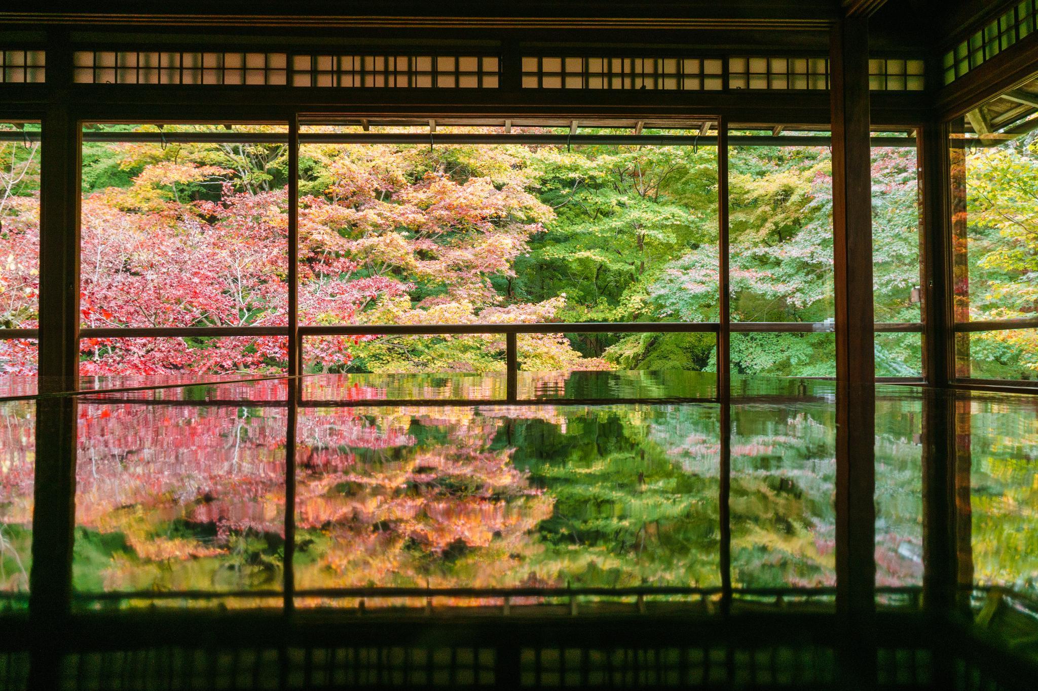 【京都】如夢似幻的琉璃光影 - 八瀨琉璃光院 86