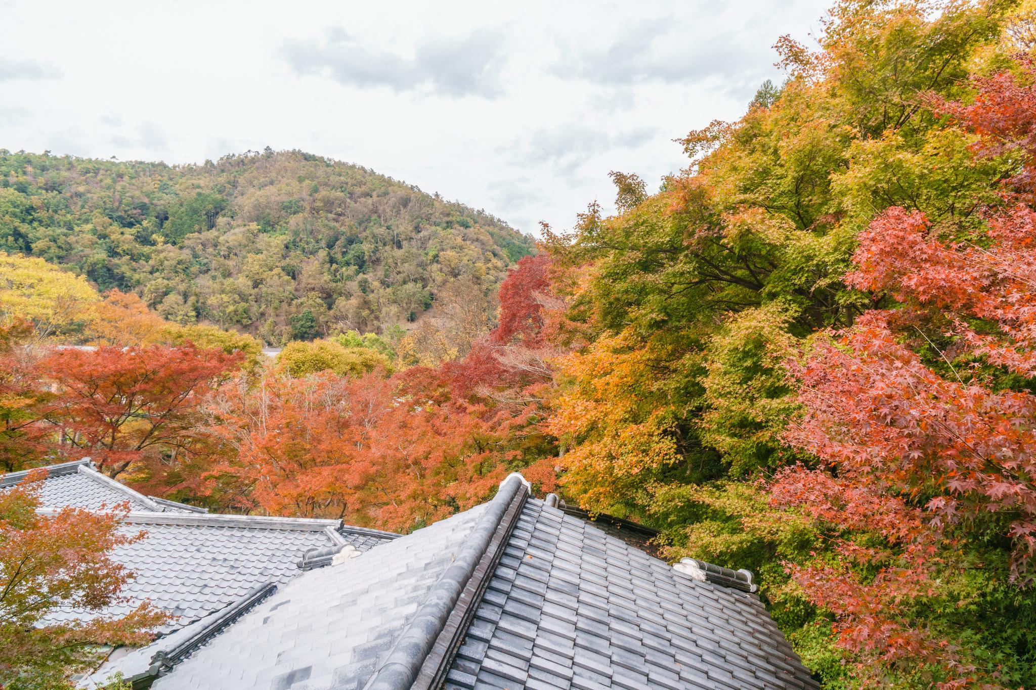 【京都】如夢似幻的琉璃光影 - 八瀨琉璃光院 91
