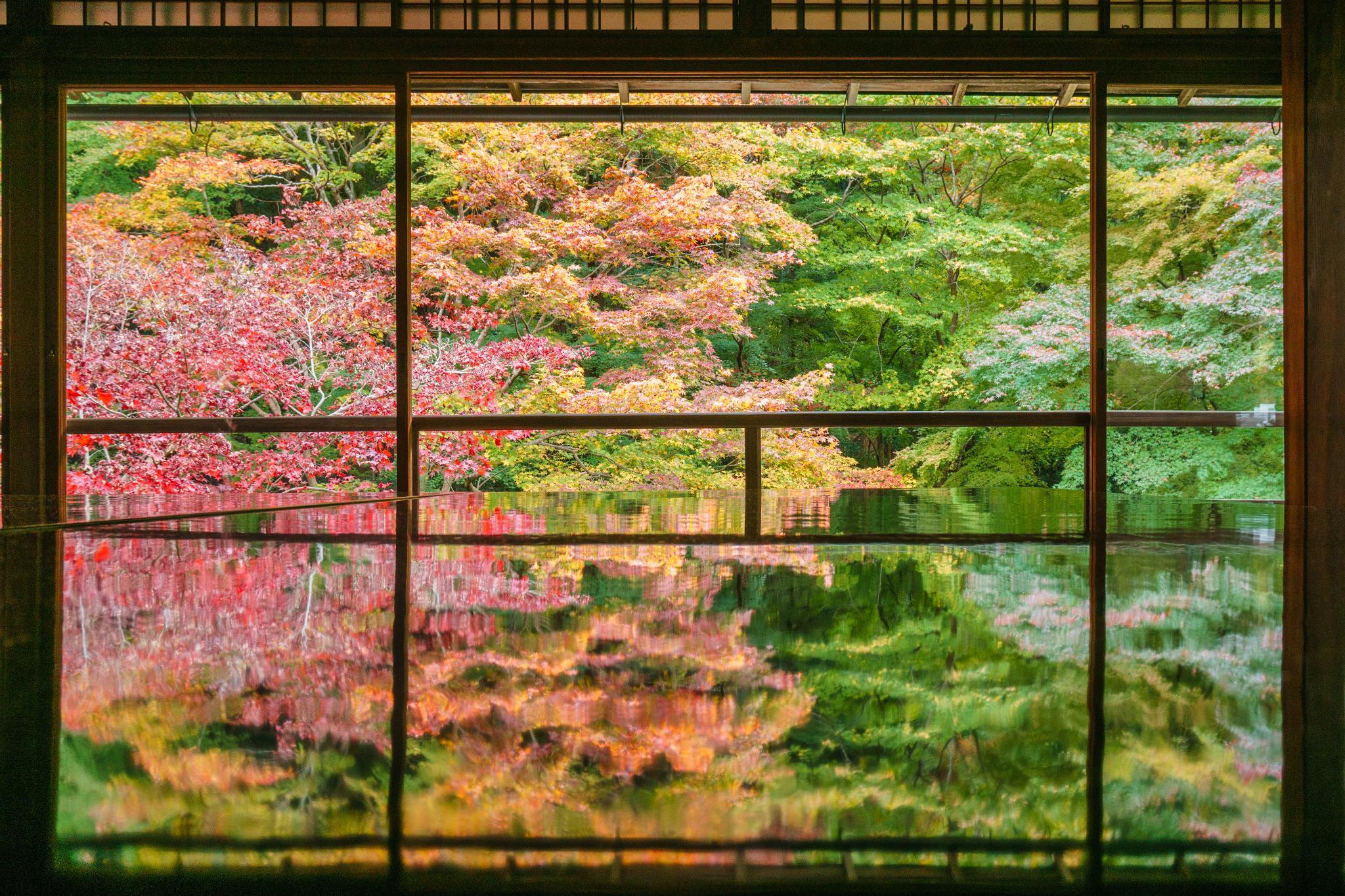 【京都】如夢似幻的琉璃光影 - 八瀨琉璃光院 89