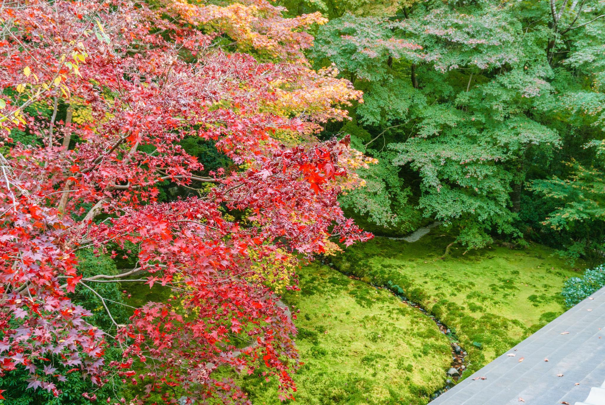 【京都】如夢似幻的琉璃光影 - 八瀨琉璃光院 93