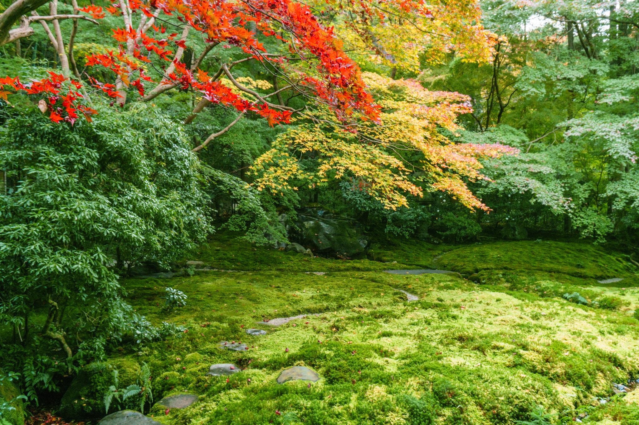 【京都】如夢似幻的琉璃光影 - 八瀨琉璃光院 68