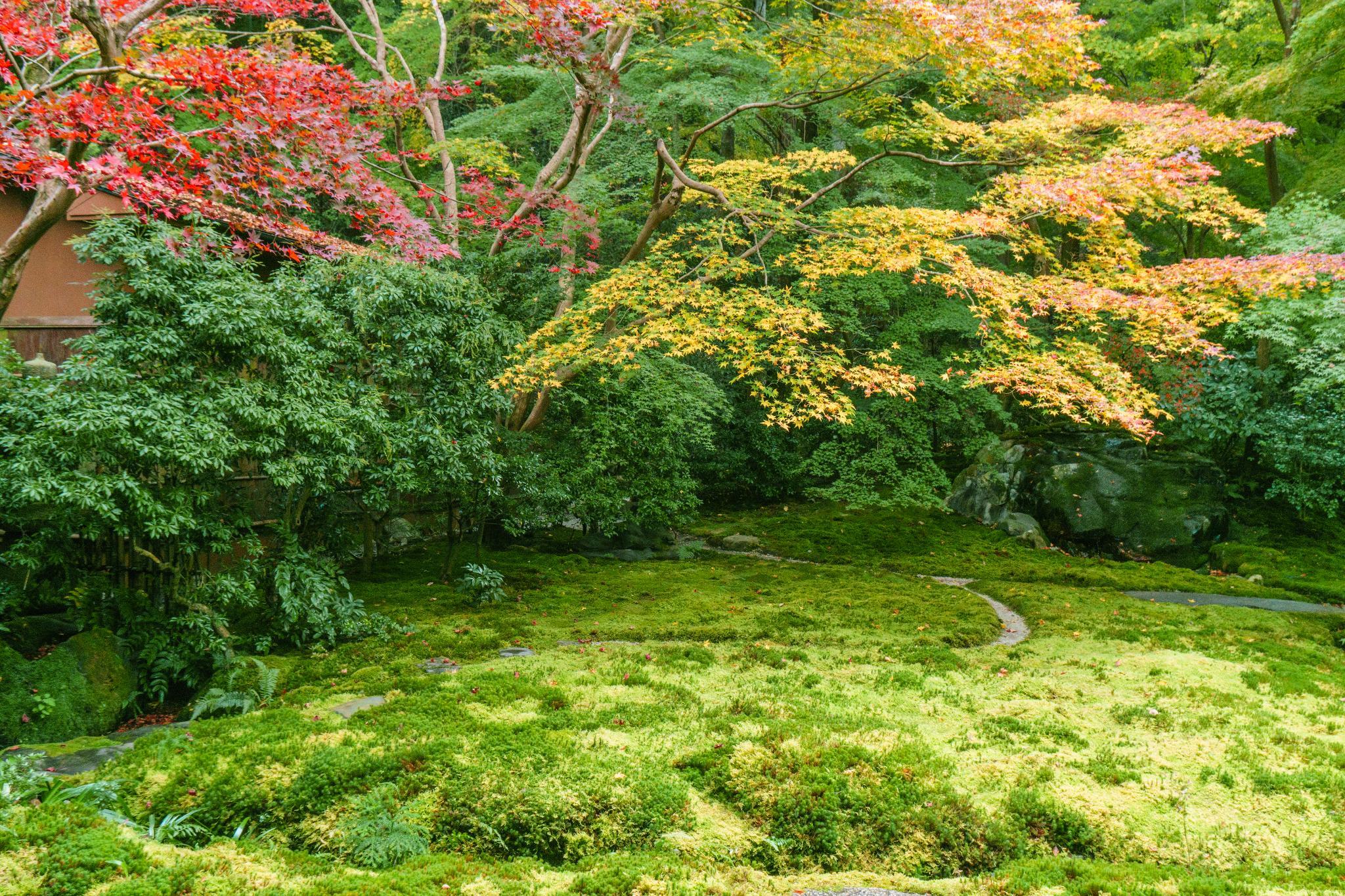 【京都】如夢似幻的琉璃光影 - 八瀨琉璃光院 92