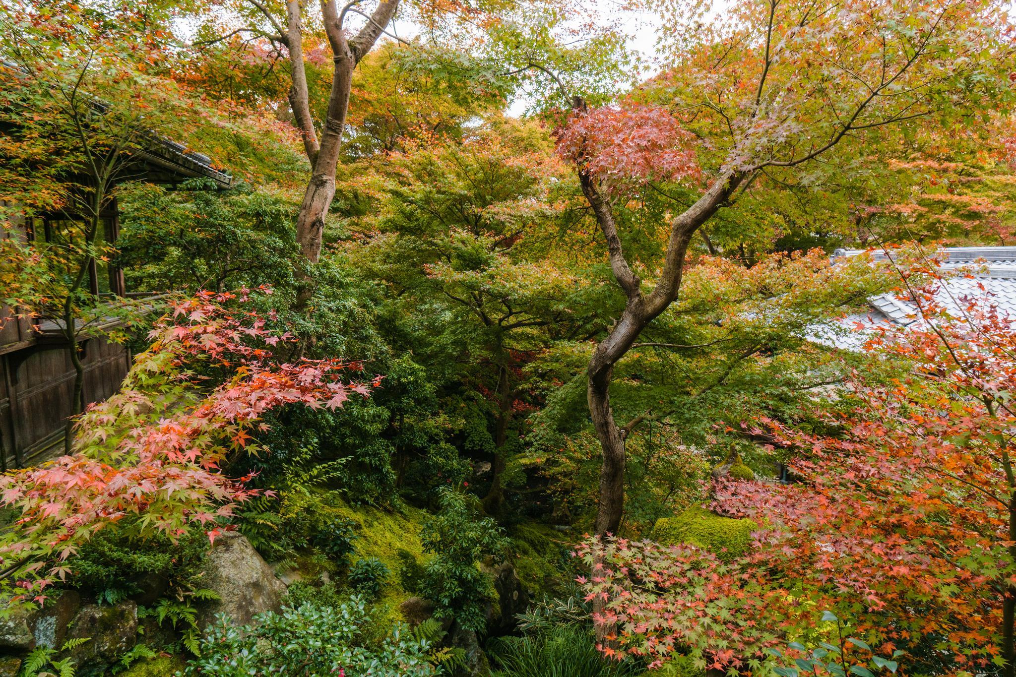 【京都】如夢似幻的琉璃光影 - 八瀨琉璃光院 95