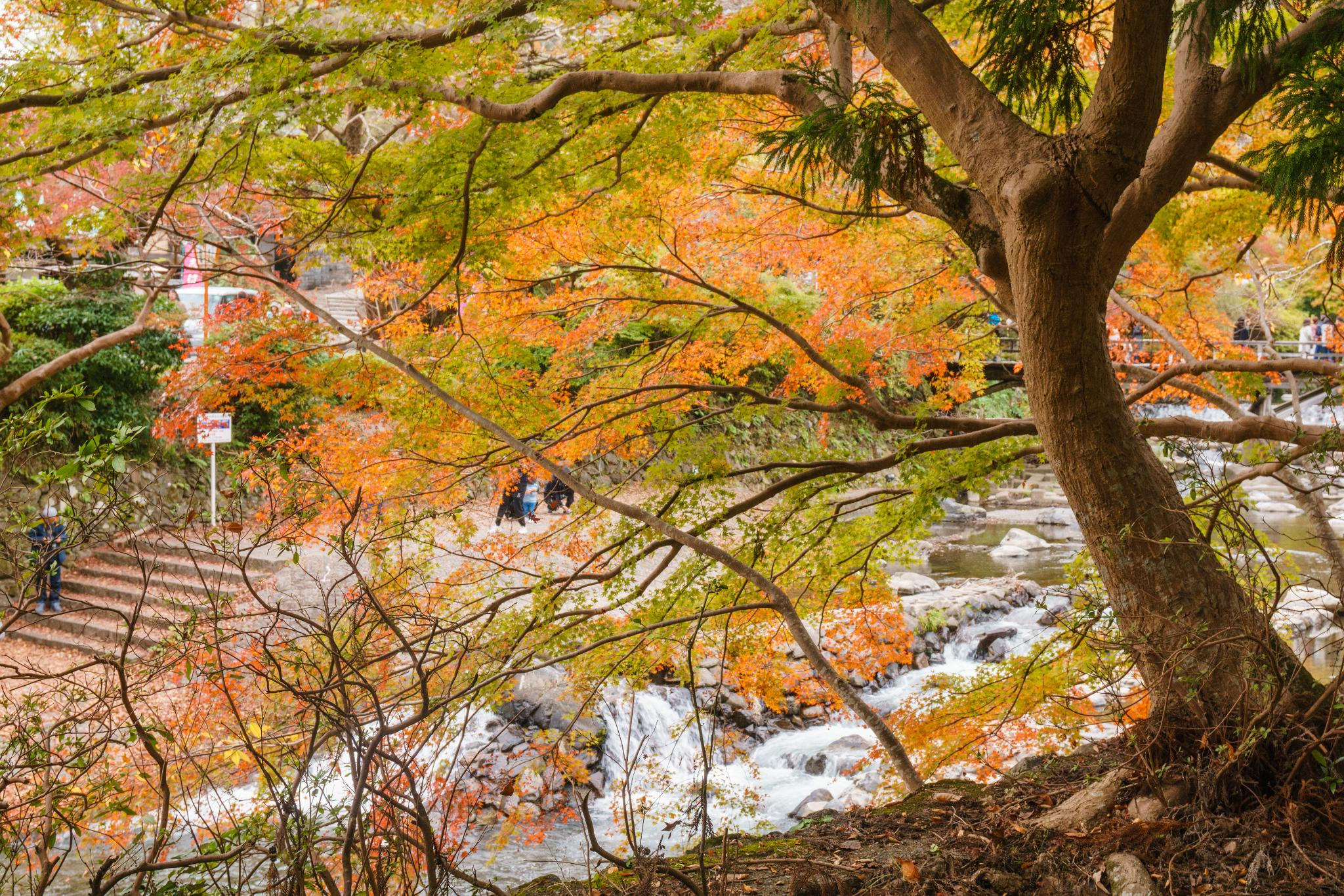 【京都】如夢似幻的琉璃光影 - 八瀨琉璃光院 75