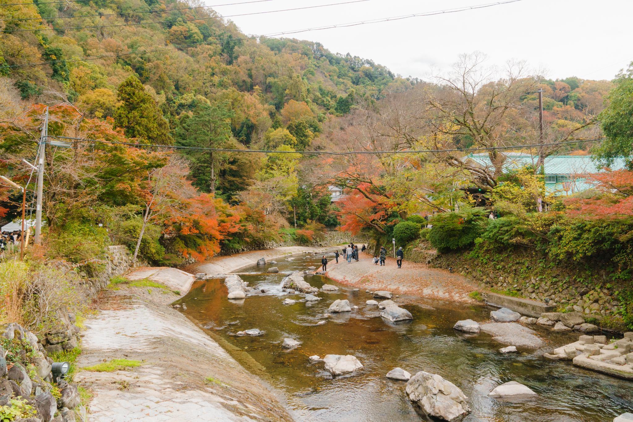 【京都】如夢似幻的琉璃光影 - 八瀨琉璃光院 74
