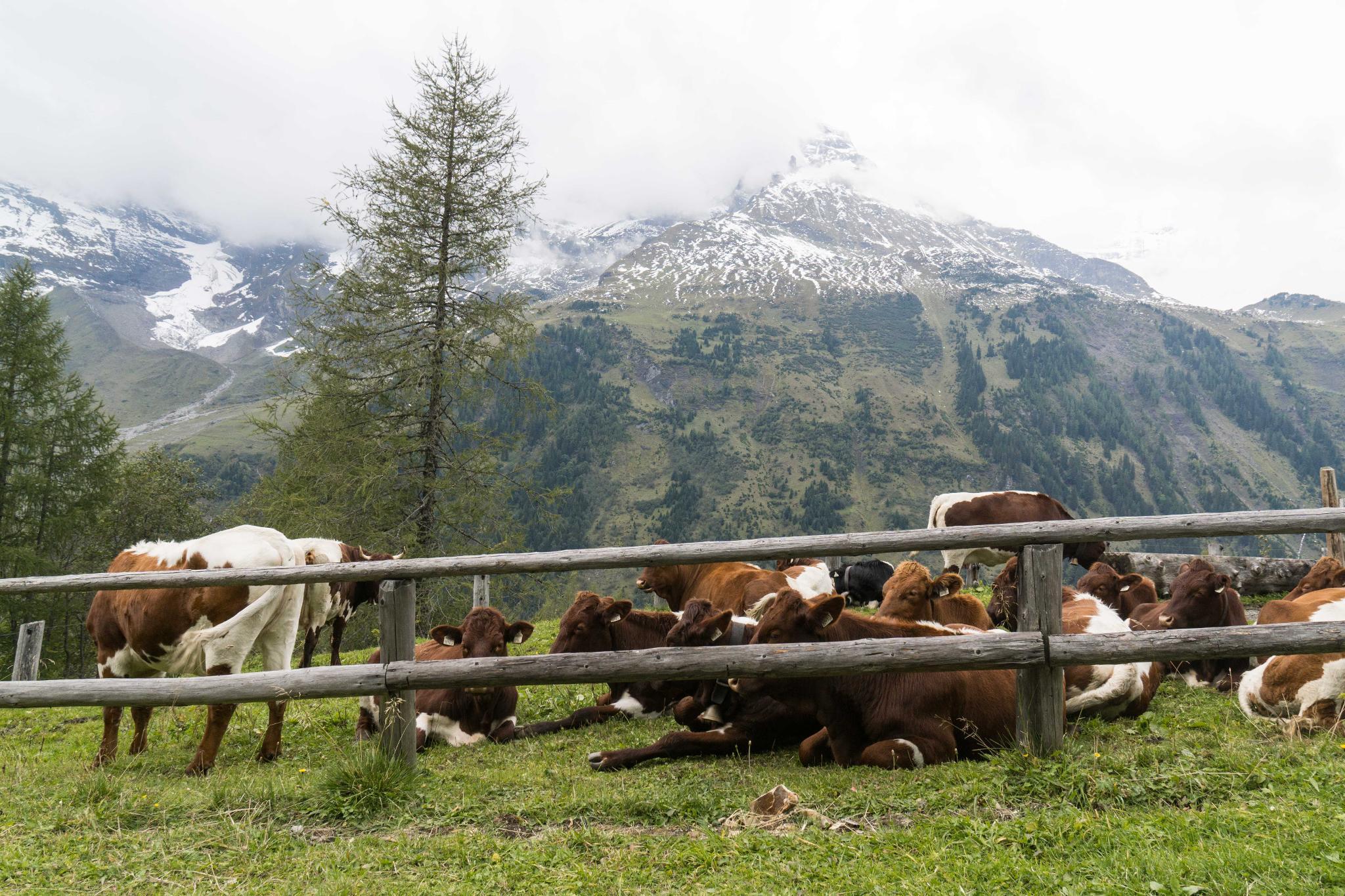 【奧地利】穿越阿爾卑斯之巔 — 奧地利大鐘山冰河公路 (Grossglockner High Alpine Road) 62