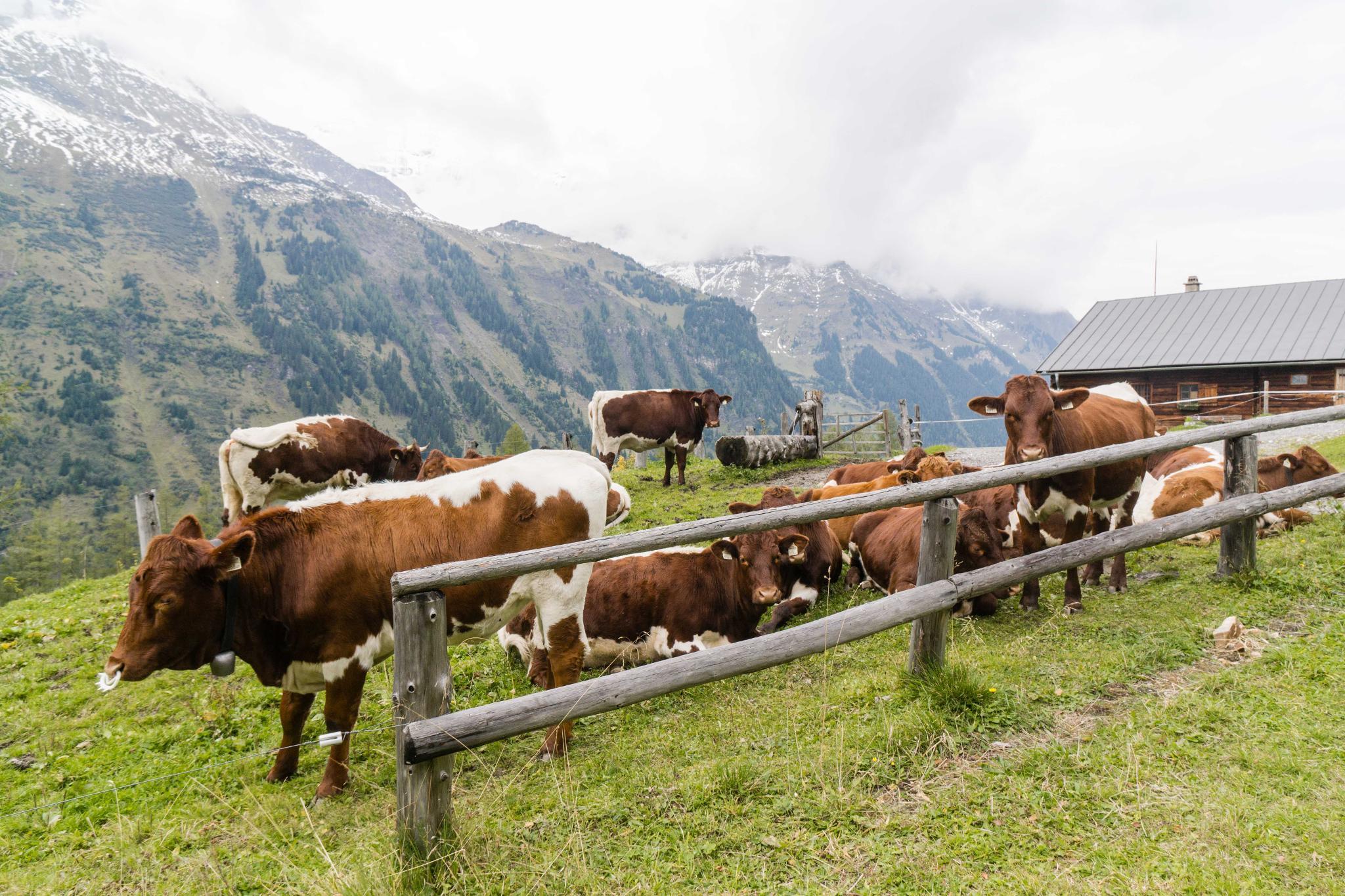 【奧地利】穿越阿爾卑斯之巔 — 奧地利大鐘山冰河公路 (Grossglockner High Alpine Road) 64