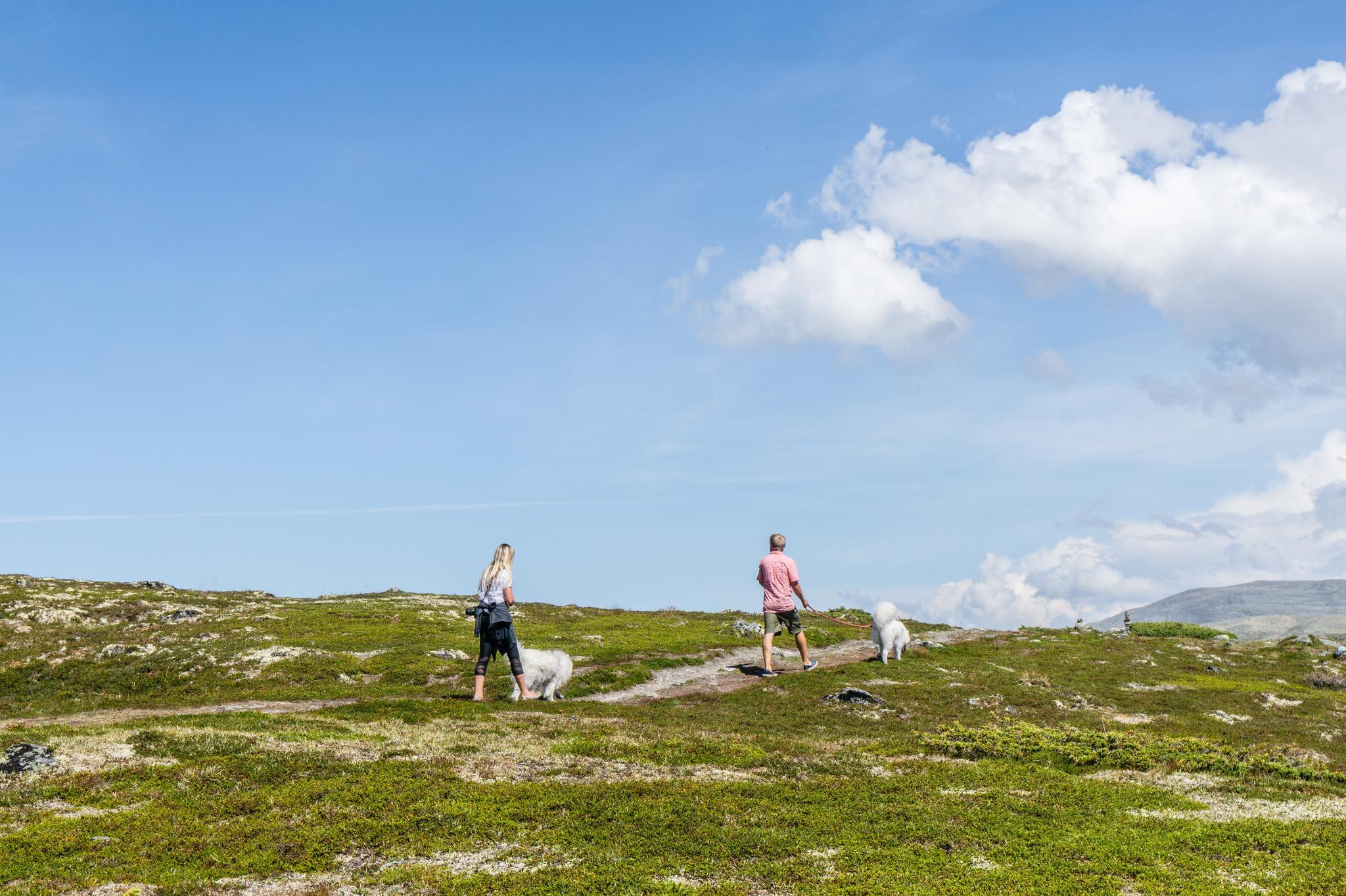 【北歐景點】世界最美景觀公路 - 俯瞰挪威松恩峽灣的 Fv243 雪之路 (Aurlandsfjellet) 24