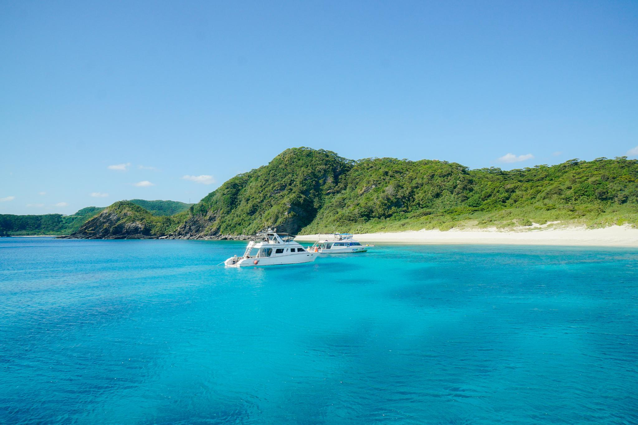 【沖繩】迷戀上沖繩的100種藍 ~ 最美離島全攻略 — 慶良間諸島國立公園