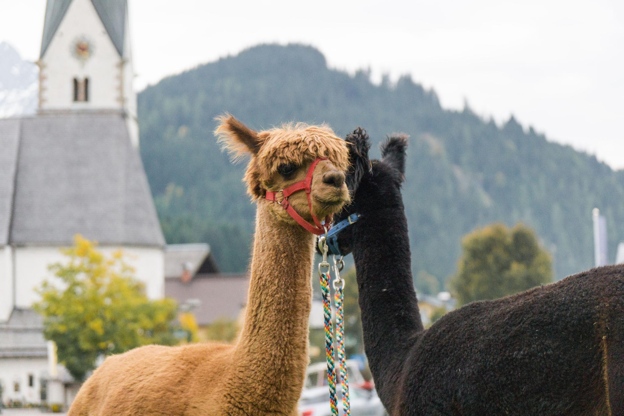 【奧地利】阿爾卑斯迷迷路!遇見美麗的奧地利風情小鎮:滕嫩山麓聖馬丁 13