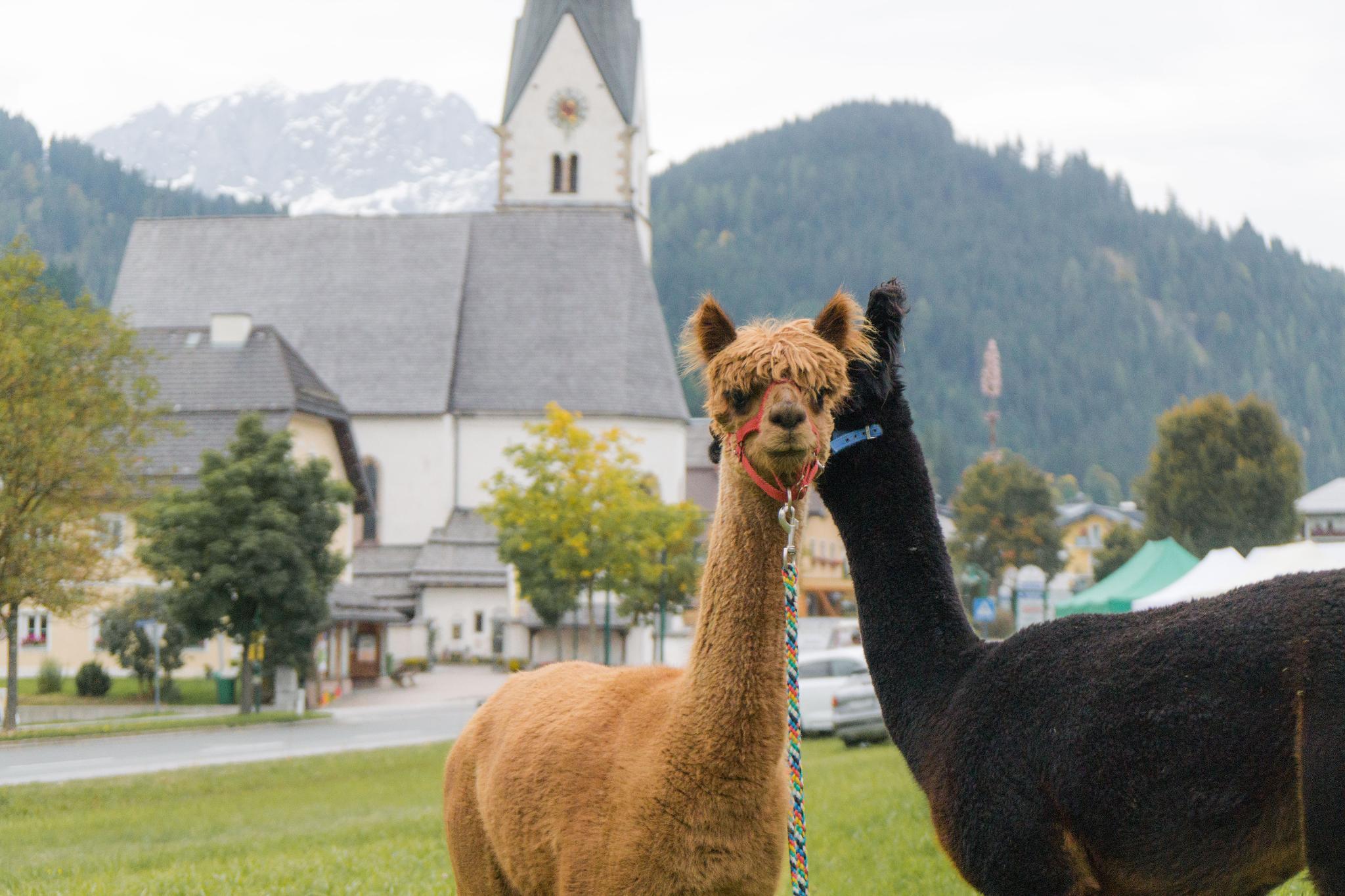【奧地利】阿爾卑斯迷迷路!遇見美麗的奧地利風情小鎮:滕嫩山麓聖馬丁
