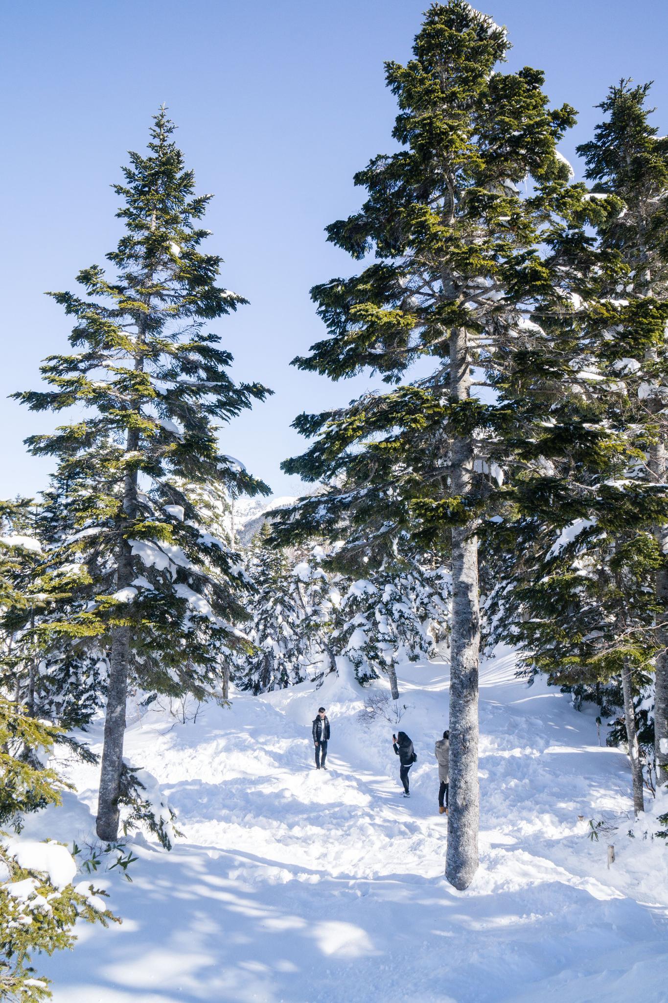 【岐阜】超級推薦!奧飛驒溫泉鄉的冬季戀歌 ~ 新穗高纜車雪景攻略 110