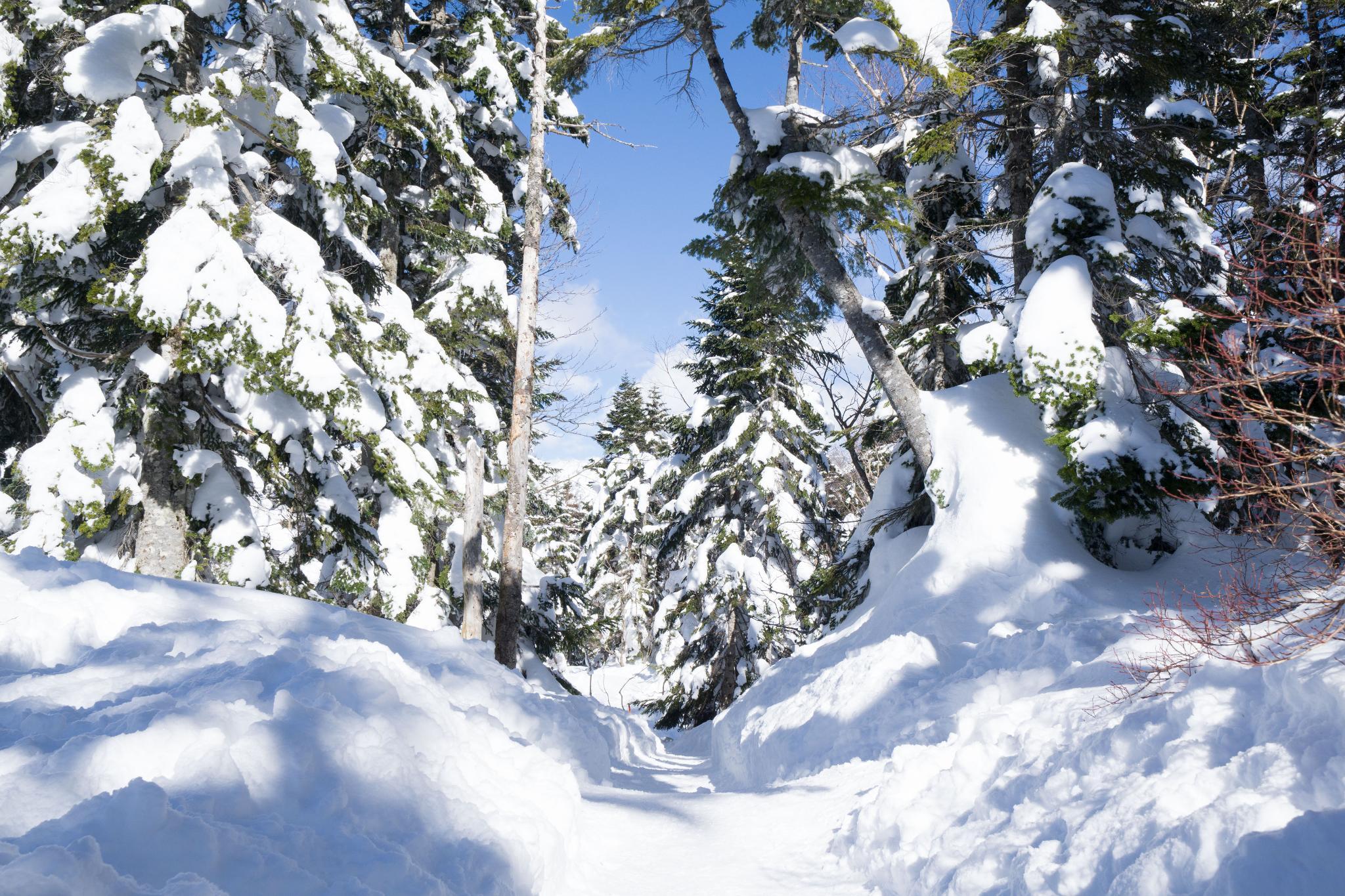 【岐阜】超級推薦!奧飛驒溫泉鄉的冬季戀歌 ~ 新穗高纜車雪景攻略 112