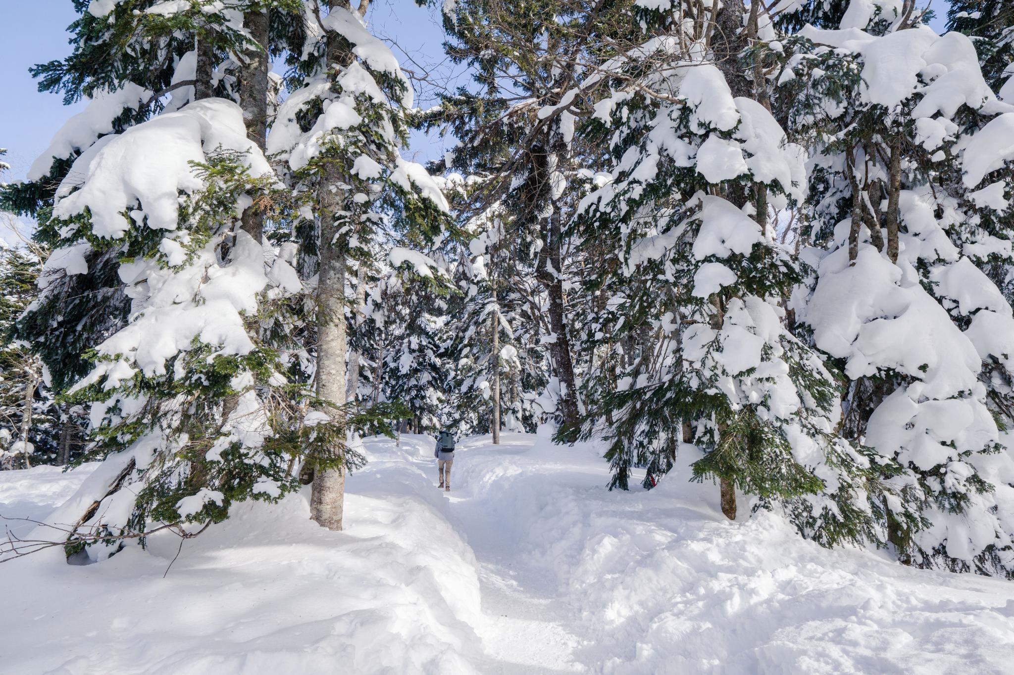 【岐阜】超級推薦!奧飛驒溫泉鄉的冬季戀歌 ~ 新穗高纜車雪景攻略 106