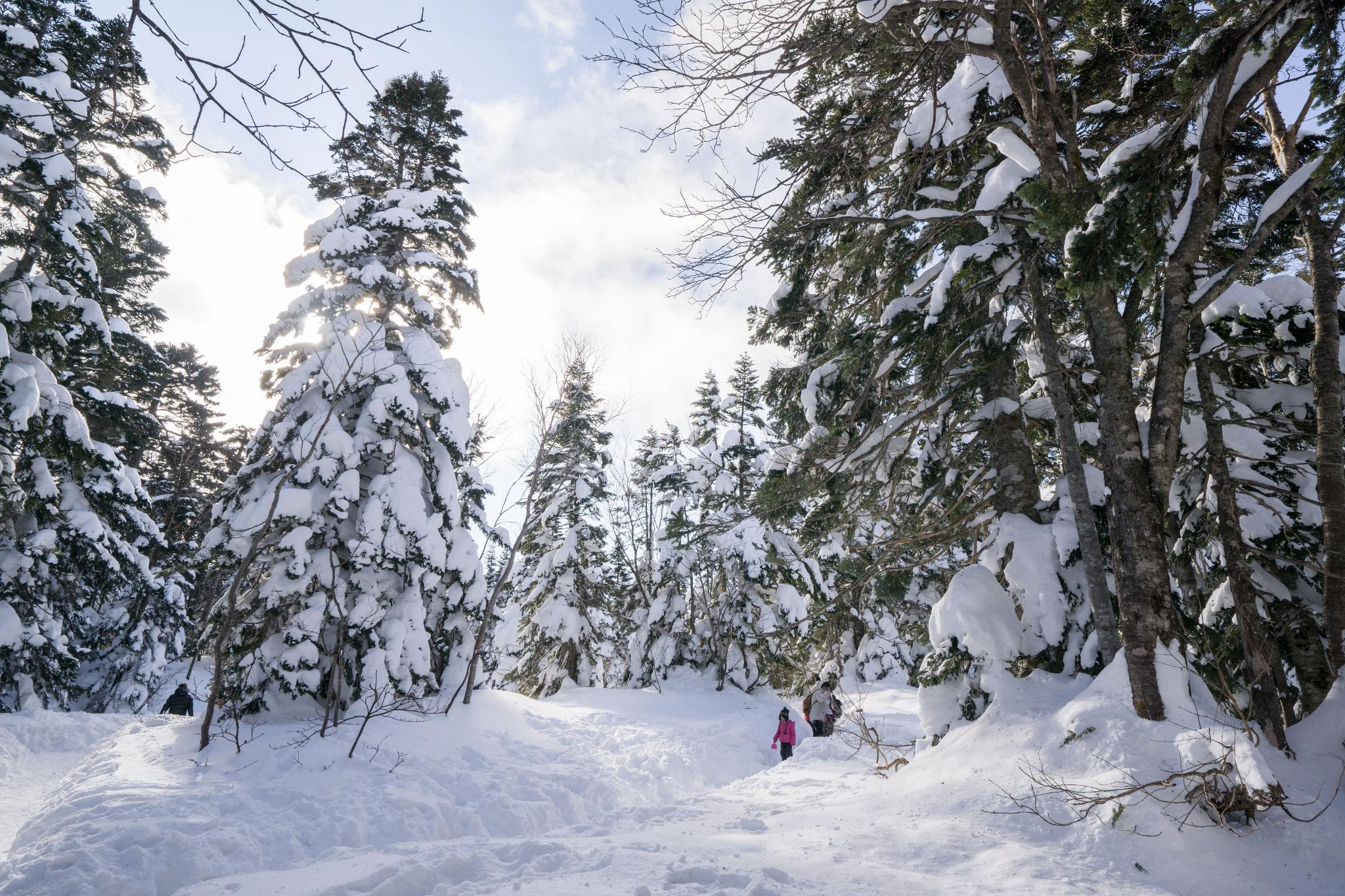 【岐阜】超級推薦!奧飛驒溫泉鄉的冬季戀歌 ~ 新穗高纜車雪景攻略 120
