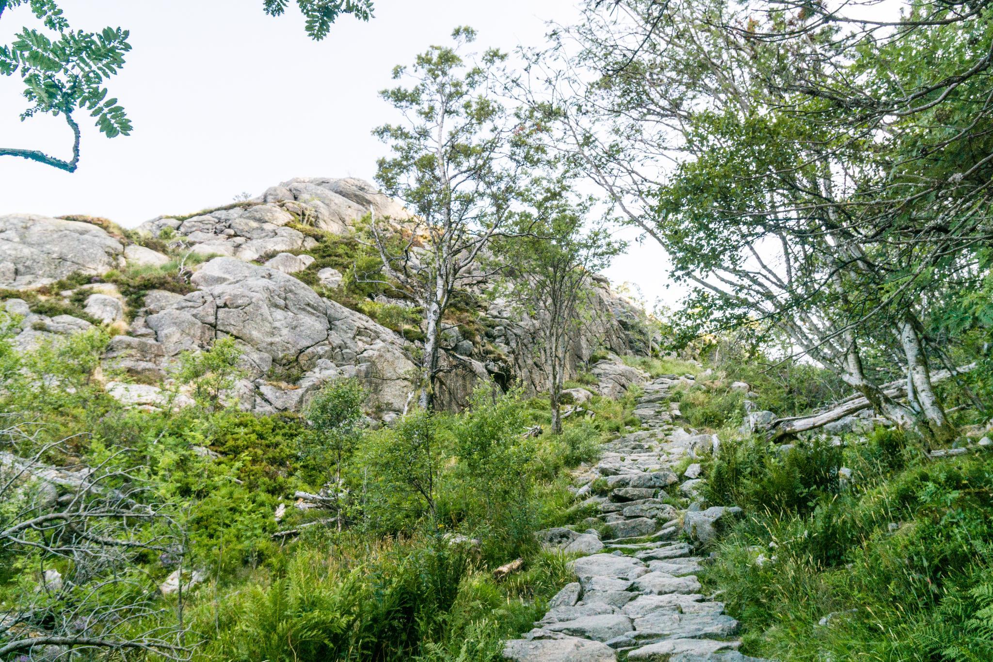 【卑爾根】超級震撼的隱藏版挪威景點 — Stoltzekleiven桑德維克斯石梯與Fløyen佛洛伊恩觀景台大縱走 9