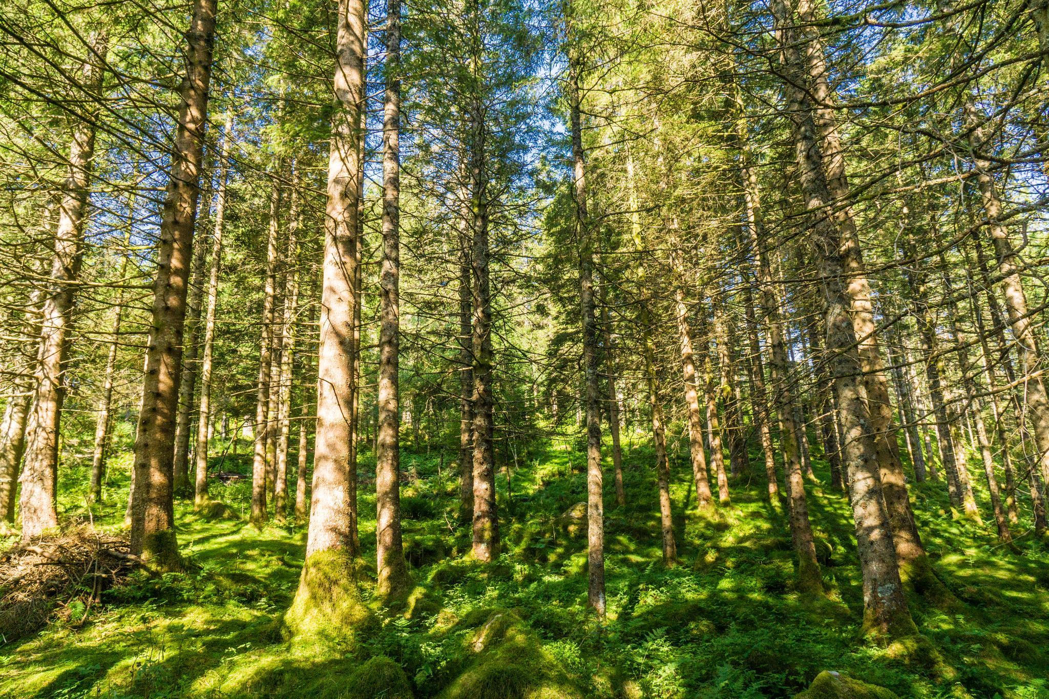 【卑爾根】超級震撼的隱藏版挪威景點 — Stoltzekleiven桑德維克斯石梯與Fløyen佛洛伊恩觀景台大縱走 23