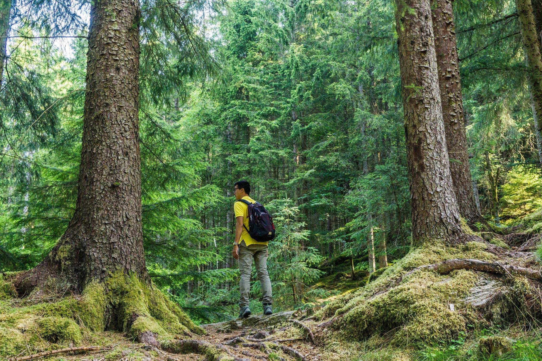 【卑爾根】超級震撼的隱藏版挪威景點 — Stoltzekleiven桑德維克斯石梯與Fløyen佛洛伊恩觀景台大縱走 24