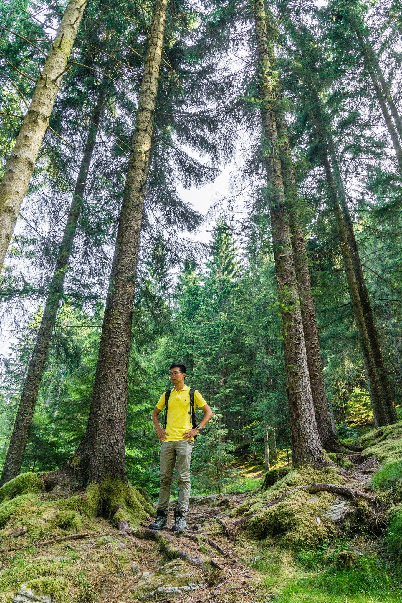 【卑爾根】超級震撼的隱藏版挪威景點 — Stoltzekleiven桑德維克斯石梯與Fløyen佛洛伊恩觀景台大縱走 25