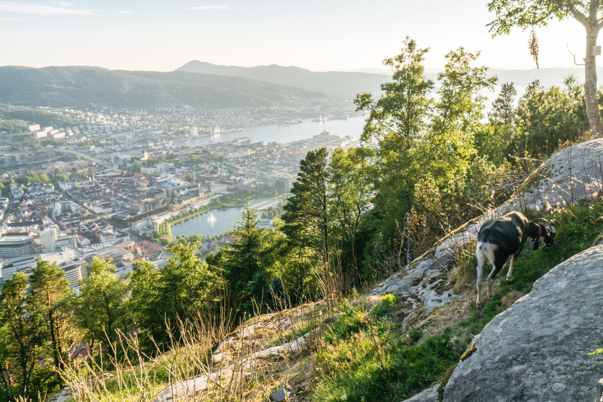 【卑爾根】Fløyen 佛洛伊恩山纜車與觀景台 — 擁抱文化港都的百萬美景 94