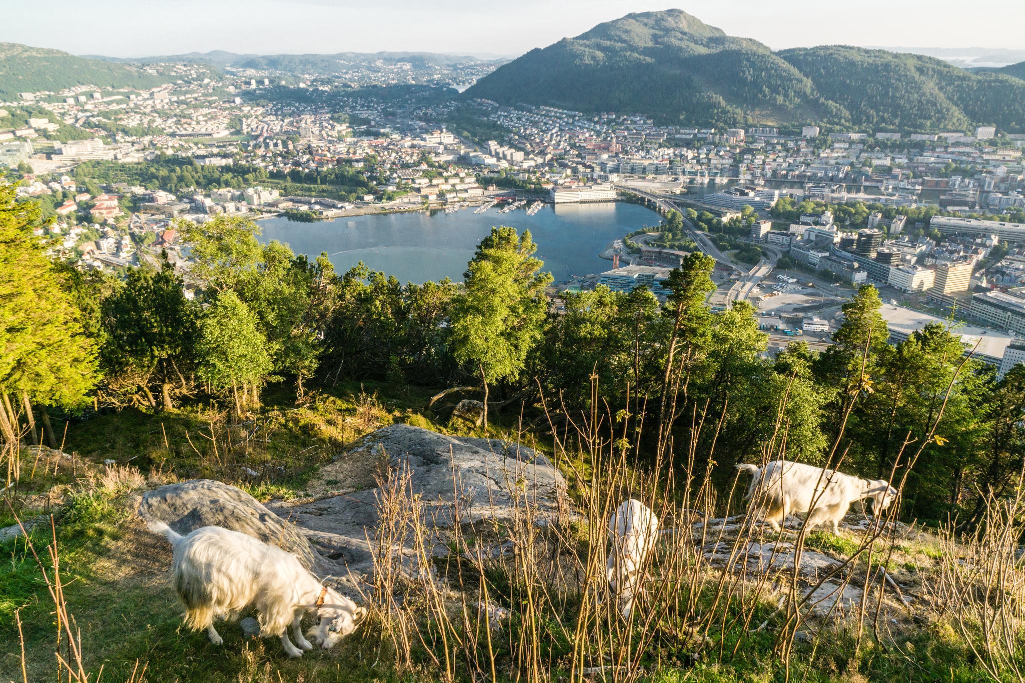 【卑爾根】Fløyen 佛洛伊恩山纜車與觀景台 — 擁抱文化港都的百萬美景 92