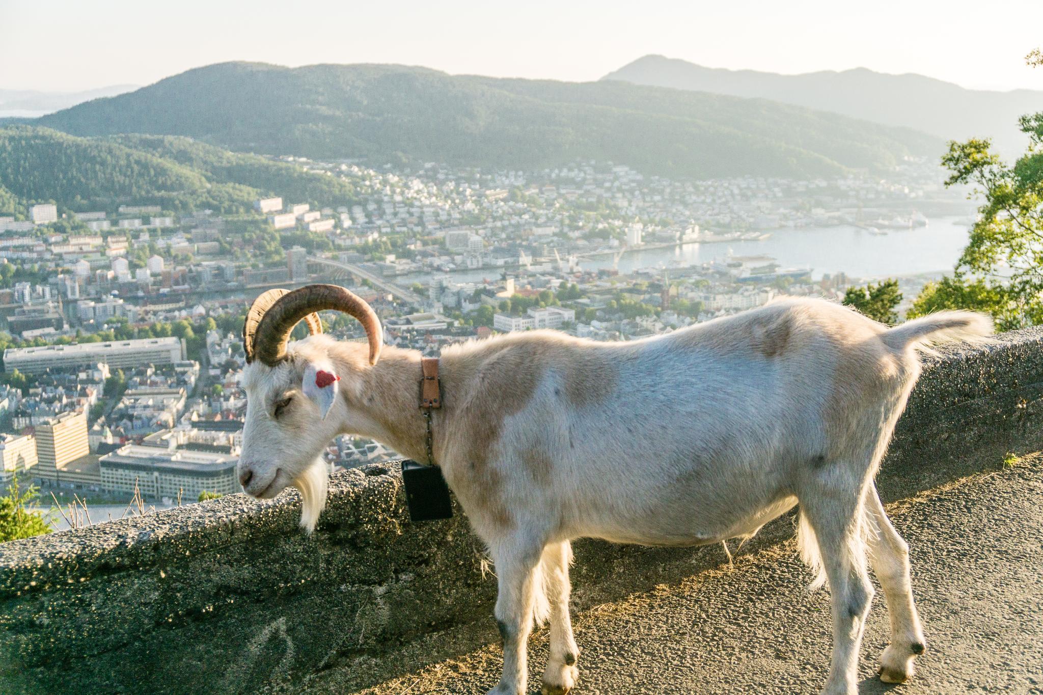 【卑爾根】Fløyen 佛洛伊恩山纜車與觀景台 — 擁抱文化港都的百萬美景 98