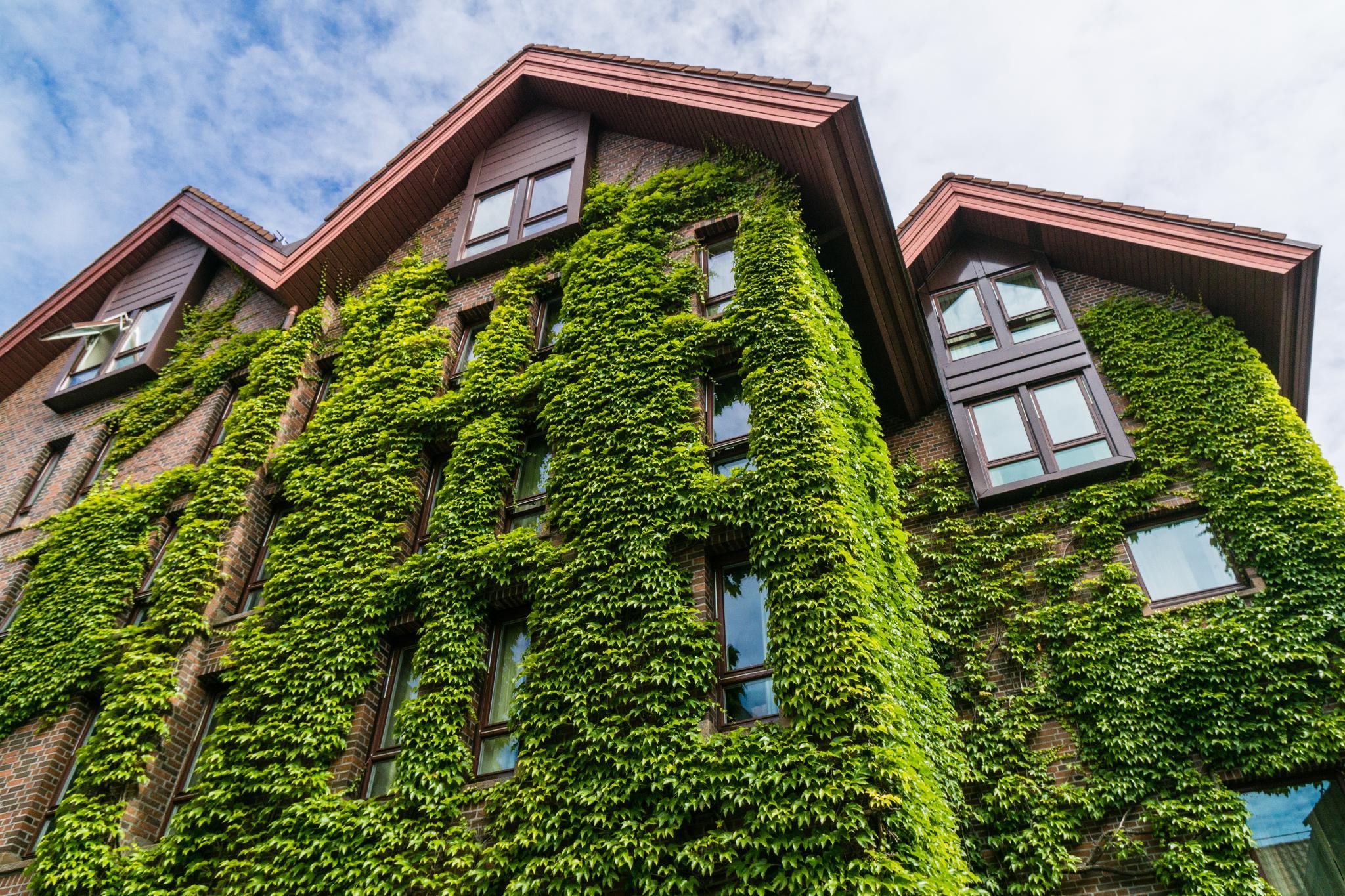 【卑爾根】Bryggen 世界遺產布呂根 — 迷失在百年歷史的挪威彩色木屋 15