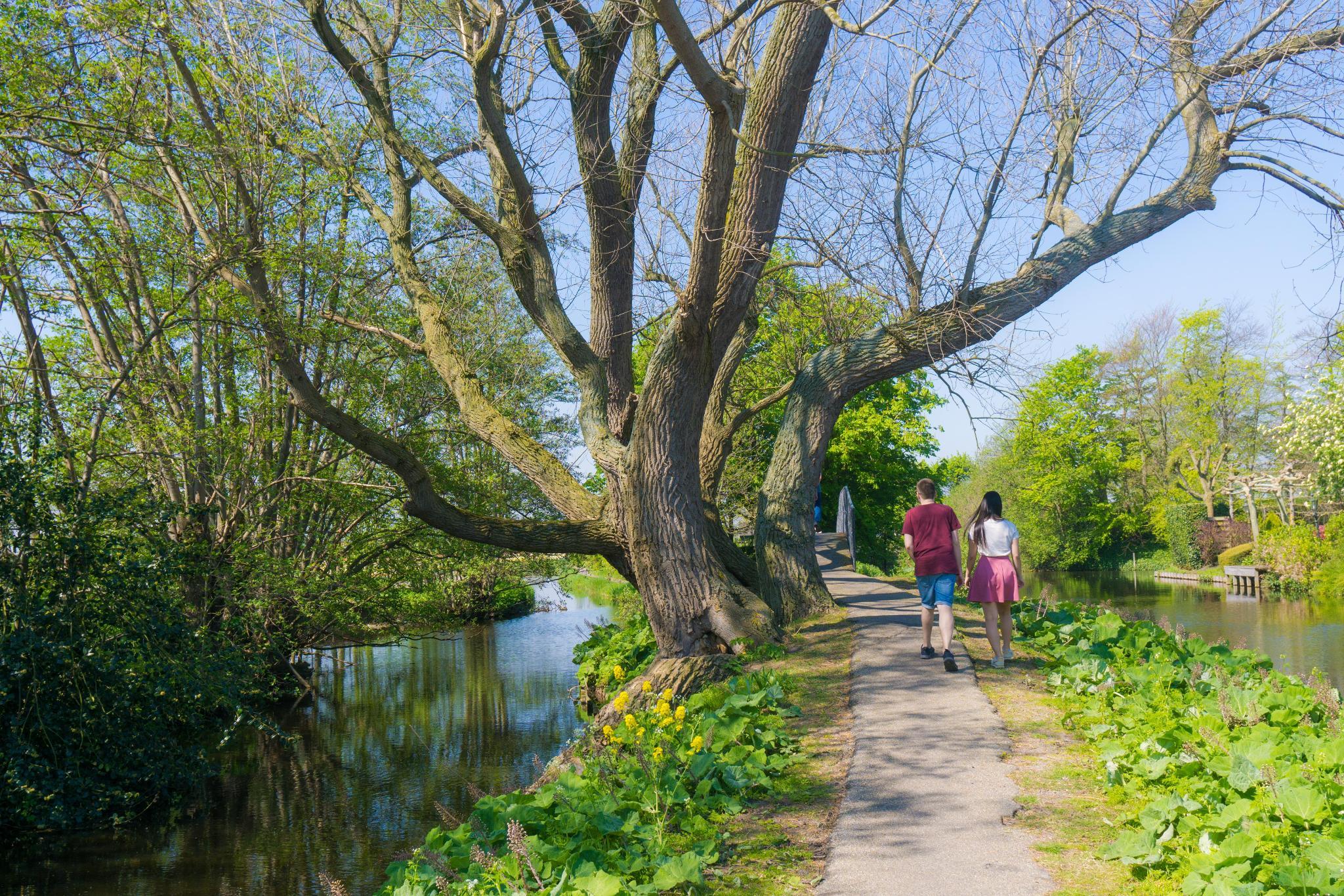 【荷蘭印象】花田嬉事:荷蘭單車花之路 16