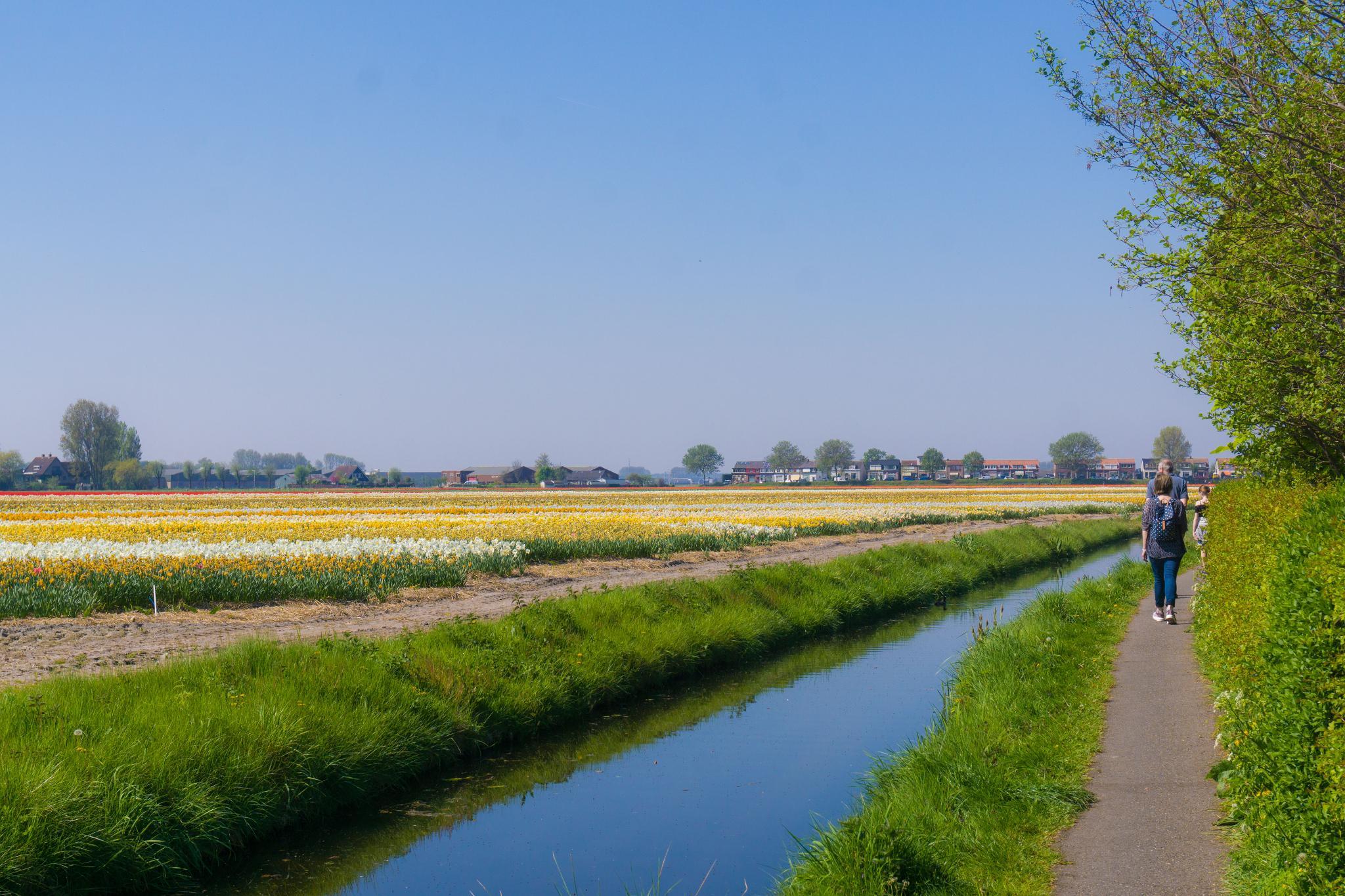 【荷蘭印象】花田嬉事:荷蘭單車花之路 17