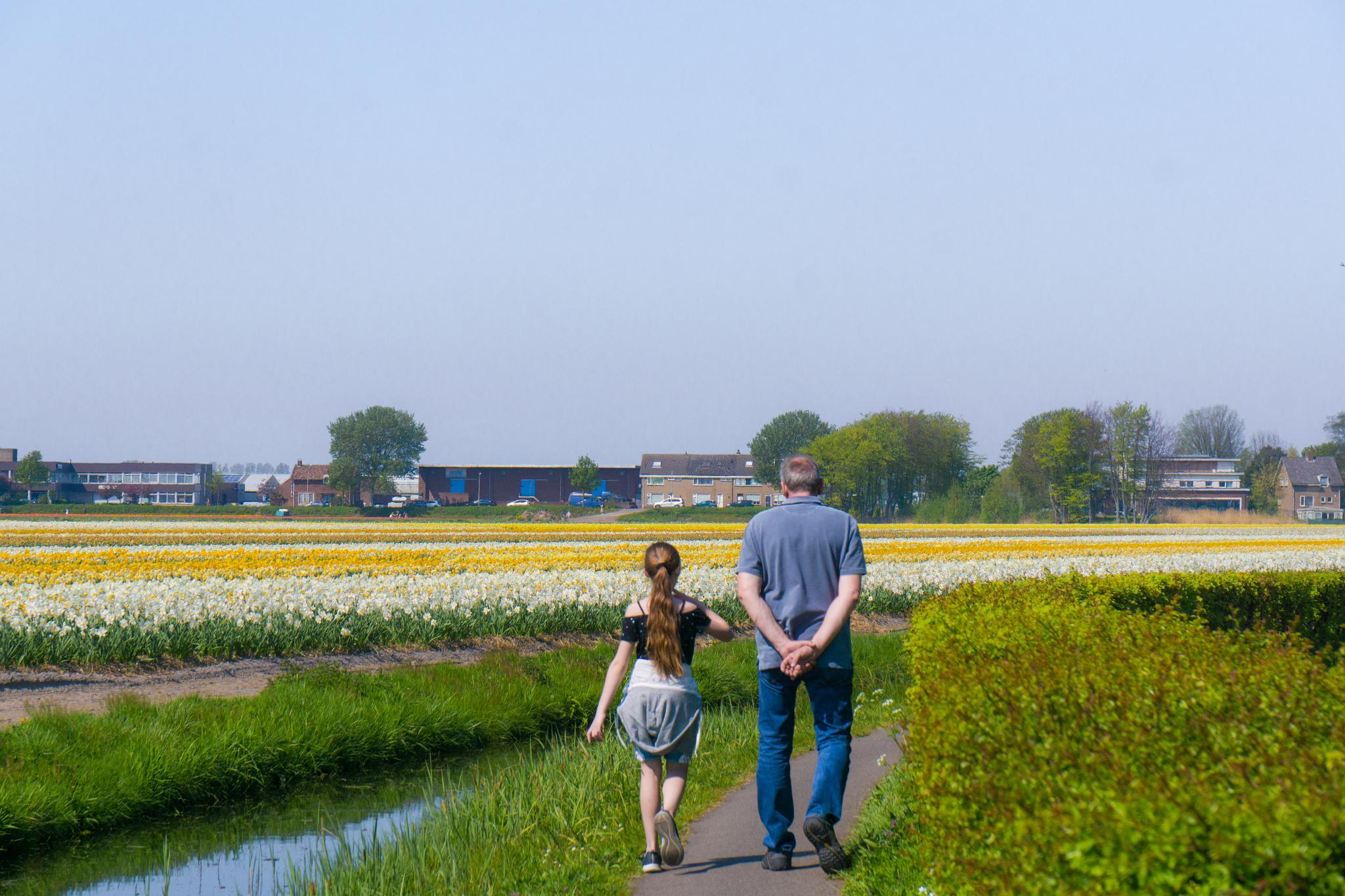 【荷蘭印象】花田嬉事:荷蘭單車花之路 18