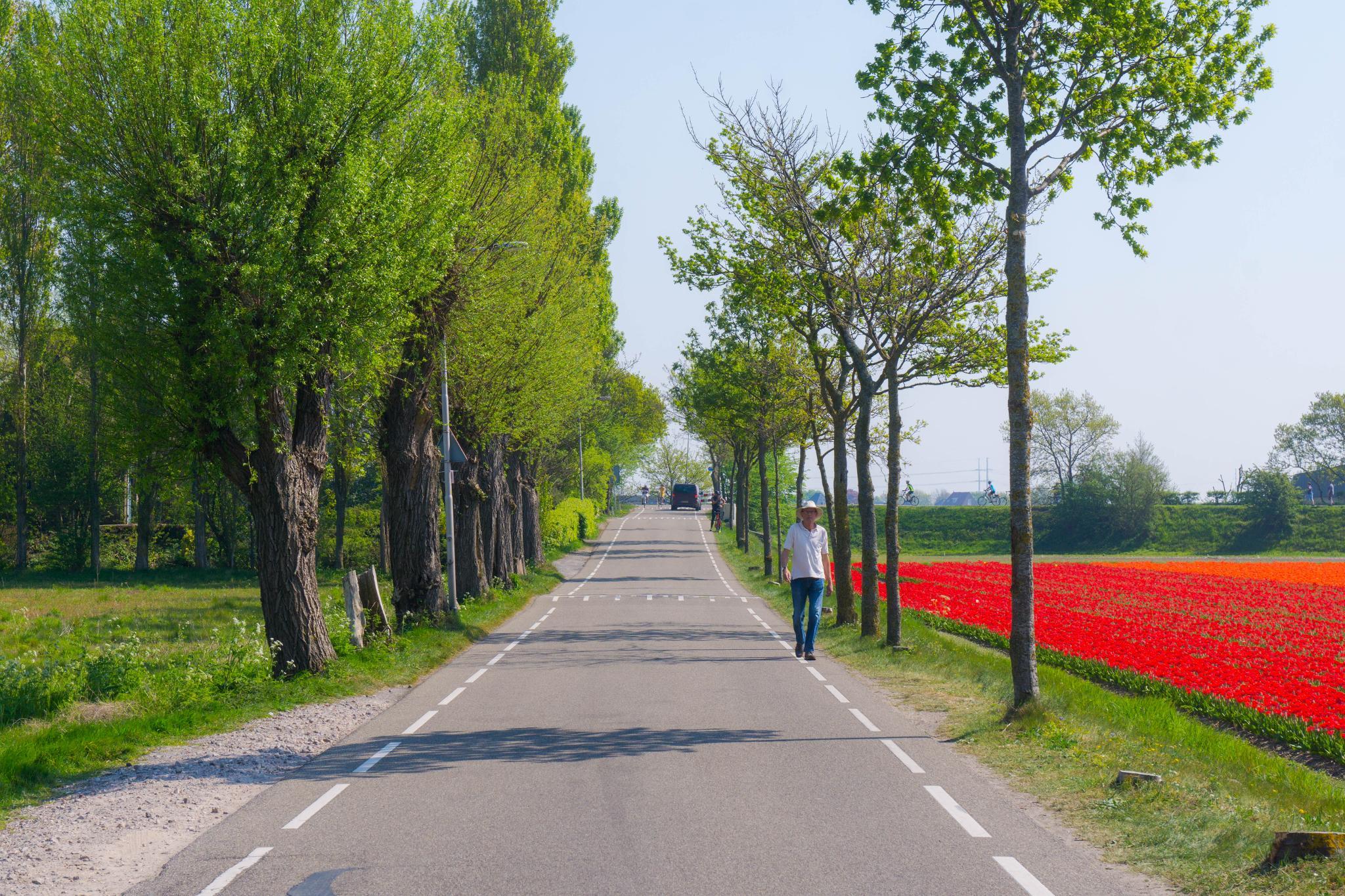 【荷蘭印象】花田嬉事:荷蘭單車花之路 30