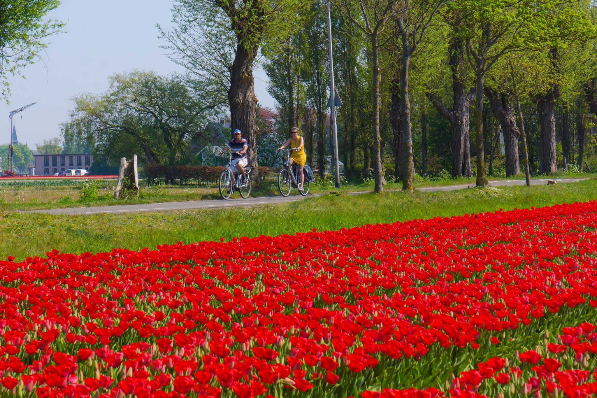 【荷蘭印象】花田嬉事:荷蘭單車花之路 32