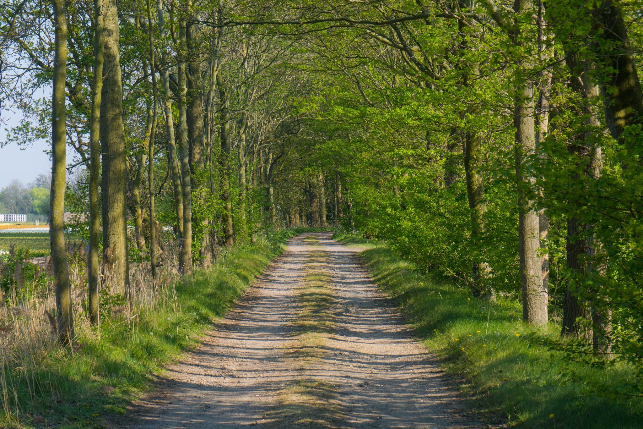 【荷蘭印象】花田嬉事:荷蘭單車花之路 45