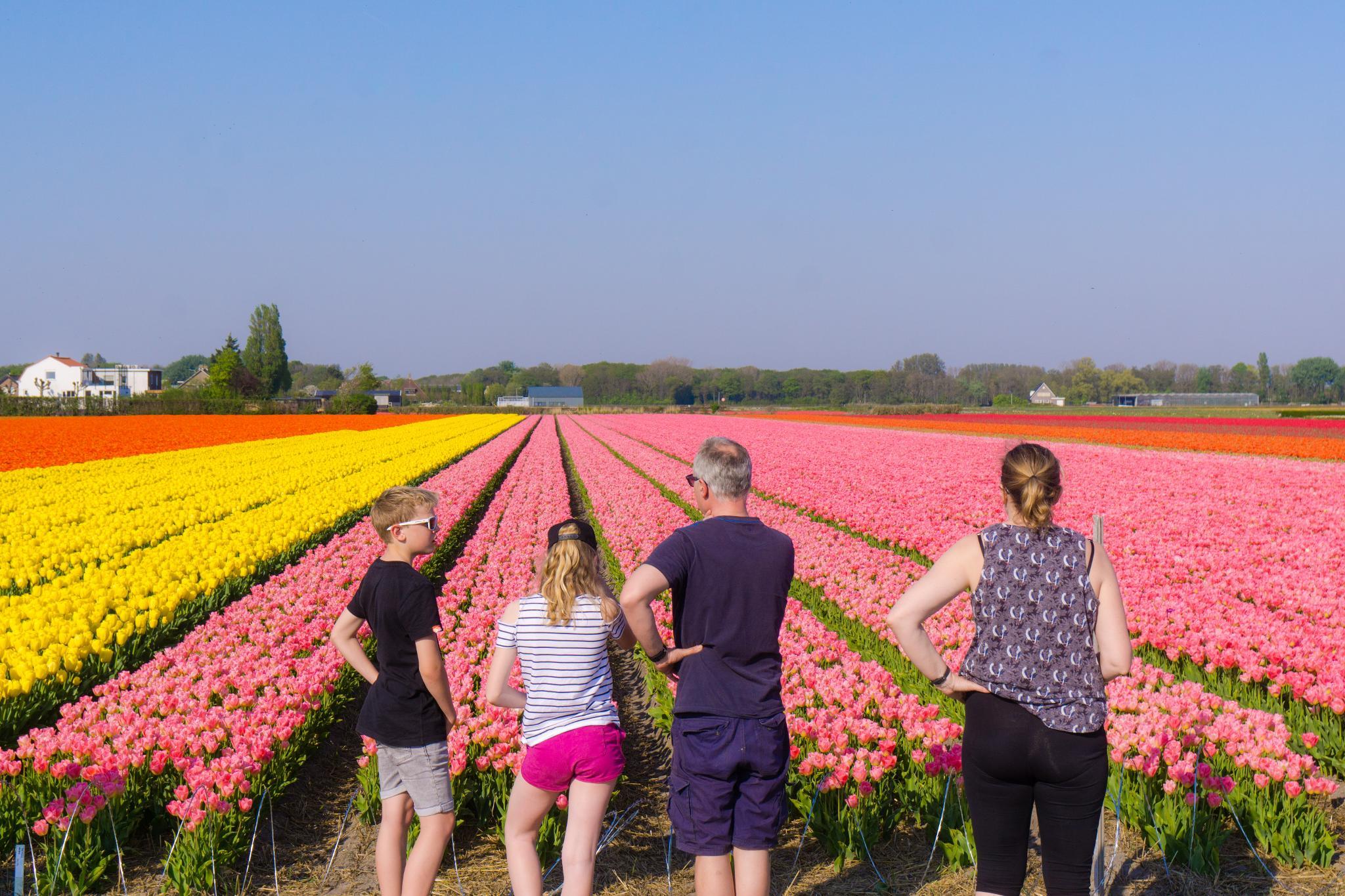 【荷蘭印象】花田嬉事:荷蘭單車花之路 49