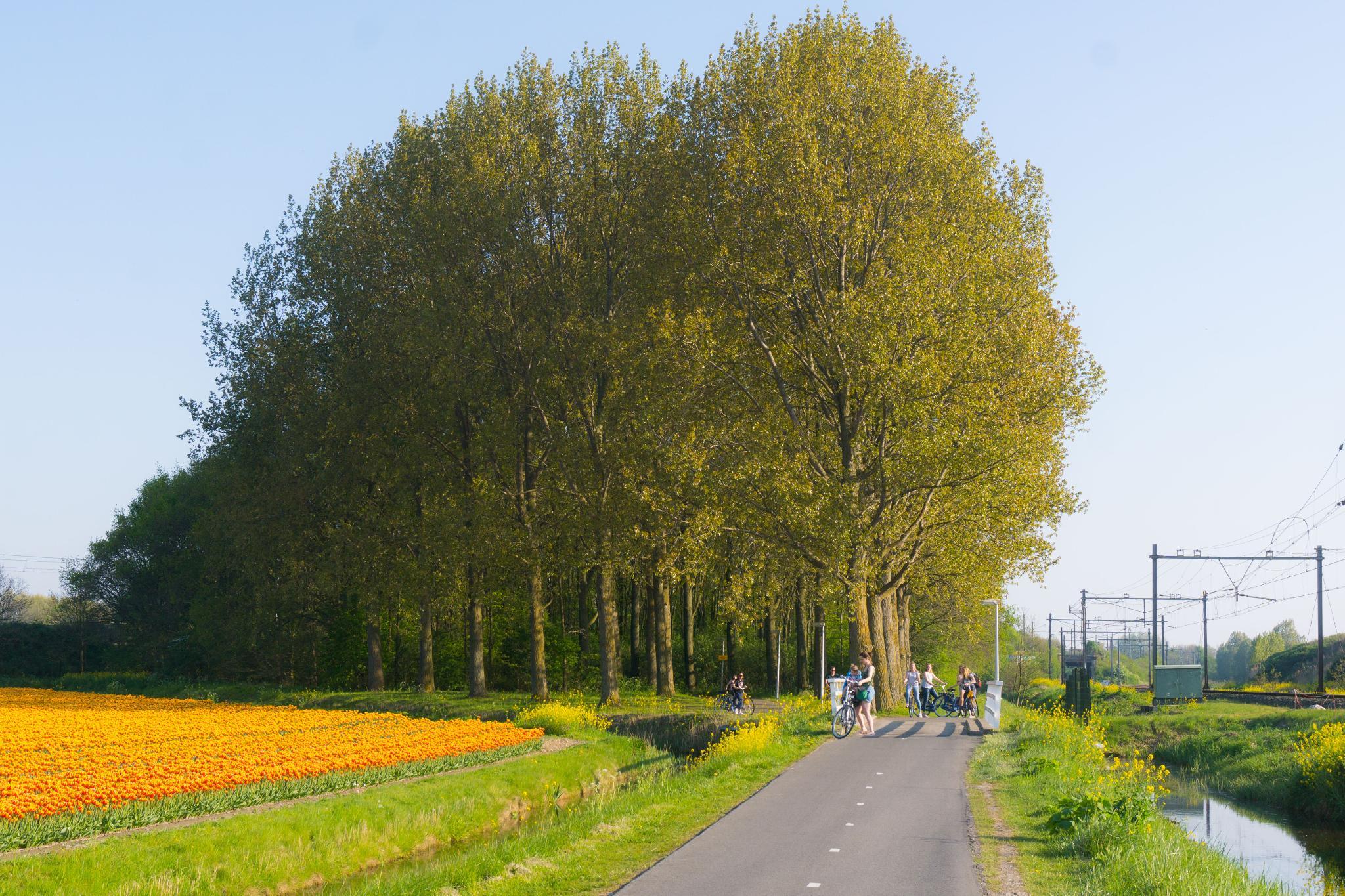 【荷蘭印象】花田嬉事:荷蘭單車花之路 51
